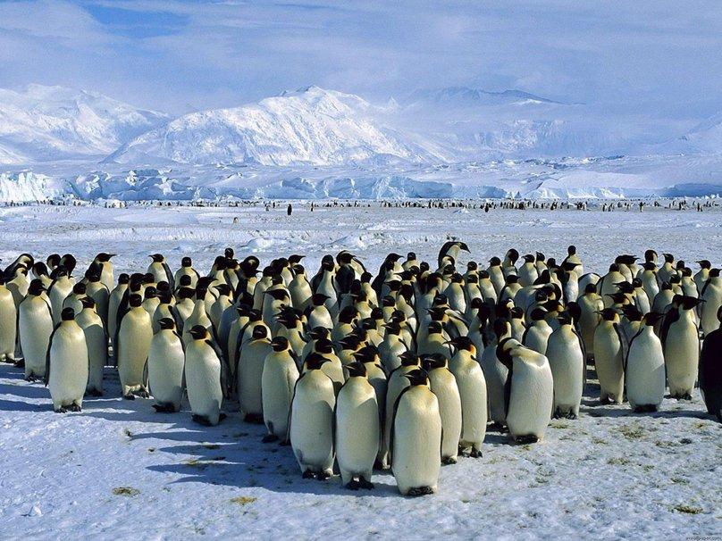 Colonie de pingouins. Crédit : http://fr.forwallpaper.com/